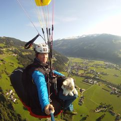 Hund Nanoq über den Dächern des Tales